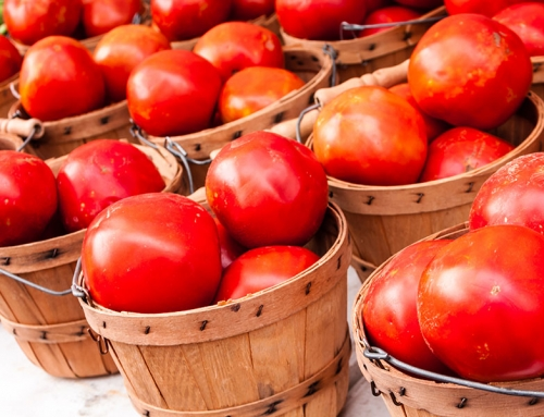 Tomato Fest – A Bushel of Fun